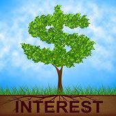 Interest Tree Shows American Dollars And Branch