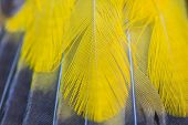 stock photo of bulbul  - feather of Black - JPG