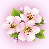 Japanese Cherry Tree, Blossoming Branch Of Sakura