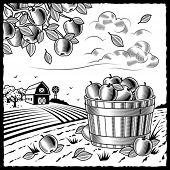 Landscape with apple harvest black and white. Vector