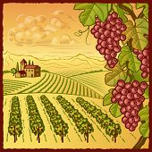 Vineyard landscape. Vector