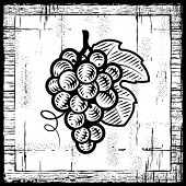 Retro grapes bunch black and white. Vector