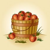 Retro bucket of tomatoes. Vector