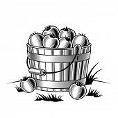 Retro bucket of tomatoes black and white