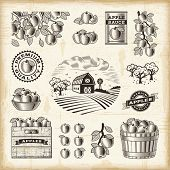 stock photo of bucket  - Vintage apple harvest set - JPG