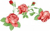 Roses with leaves