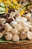 Pleurotus Eryngii  Mushroom (king Oyster Mushroom)