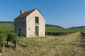 Vineyard House In Beaune