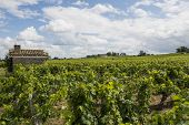 Vinyard At Saint-emilion With House