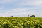 Vinyard With Tower And Tractor Roque