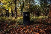 Litter Bin In A Forest