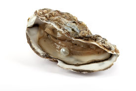 picture of oyster shell  - Oyster with pearl culinary food with luck of finding jewelry - JPG