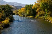 picture of cottonwood  - Truckee River outside of Reno Nevada showing fall colors of Cottonwoods and other deciduous trees - JPG