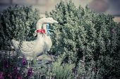 image of garden sculpture  - Duck statues in english garden - JPG