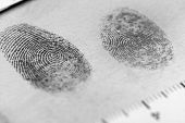 pic of criminology  - View of a fingerprint revealed by printing - JPG