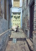 stock photo of household farm  - Streets of Varanasi - JPG
