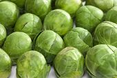 image of brussels sprouts  - Brussels sprout  - JPG