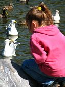 Little Girl And Seagull