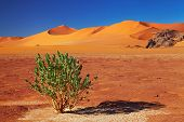 Single tree in Sahara Desert, Tadrart, Algeria