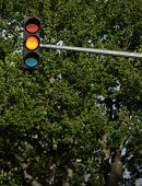 Traffic lights - orange light is on (against lovely tree greenery)
