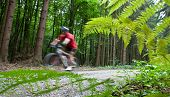 Mountain biking in a forest - biker on a forest biking trail going fast (motion blurred image)