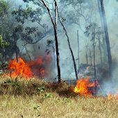 Bushfire in tha Australian outback