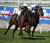 MELBOURNE - MARCH 13: Rock Classic races to the lead to win the Crown Guineas at Flemington on March
