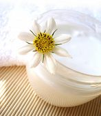 cosmetic moisturizing cream with chamomile