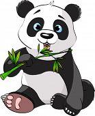 Baby Panda Sitting And Munching On Bamboo