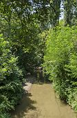 Мagnetic Landscape Of Summertime Nature With Green Deciduous Forest And River In  The North Park, Bu poster