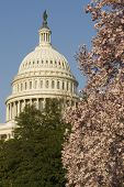 U.S. Capitol Washington D.C. series 02