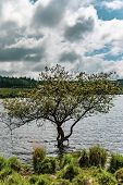 A Tree Growing In The Lake Caused By Fernworth Dam In Dartmoor National Park, Devon, United Kingdom poster