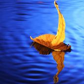 sailing ship make from yellow leaf
