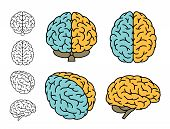 Human Brain Anatomy. Set Of Multiple Views. Left Brain Versus Right Brain. Vector Illustration. poster