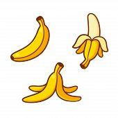 Set Of Cartoon Banana Drawings: Single, Peeled And Banana Peel On The Ground. Vector Clip Art Illust poster