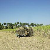 cosecha de caña de azúcar, provincia de Sancti Spiritus, Cuba