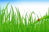 Green Grass With Ladybird