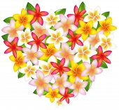 stock photo of plumeria flower  - Heart From Colorful Fragipani Flowers - JPG