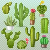 Cactus Vector Botanical Cacti Green Cactaceous Succulent Plant Botany Illustration Floral Realistic  poster