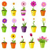 Spring Flowers In Pots, Isolated On White Background