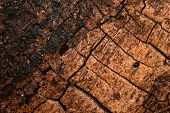 Texture Of Old Partially Burnt Tree With Beautiful Dark Cracks Close-up Fantastic Natural Background poster