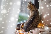 pets, christmas and hygge concept - tabby cat looking through window at home in winter over snow poster