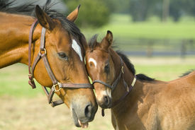 stock photo of baby animal  - Baby Mine - JPG