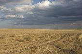 After Harvest - A Plowed Field In Colorado