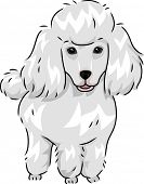 Illustration Featuring a Cute and Furry Poodle poster