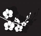orquídea branca estilizada
