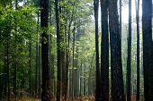 Medieval Forest