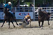 SAN JUAN CAPISTRANO, CA - AUGUST 25: unidentified cowboy competes in the steer wrestling event at the PRCA Rancho Mission Viejo rodeo in San Juan Capistrano, CA on August 25, 2012.