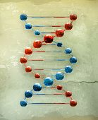 Dna, old-style vector