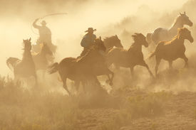 foto of wild horse running  - Two Cowboys galloping and roping through the desert - JPG